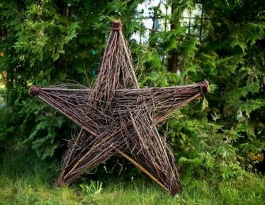 Gwiazda z brzozy
